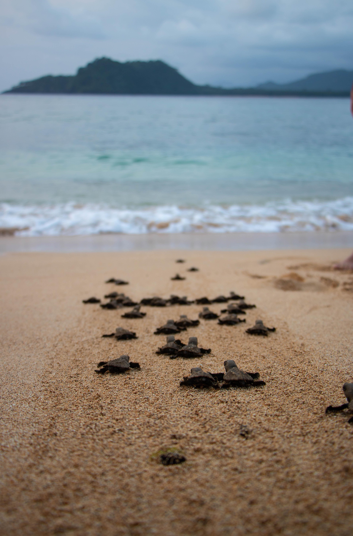 Turtles São Tomé