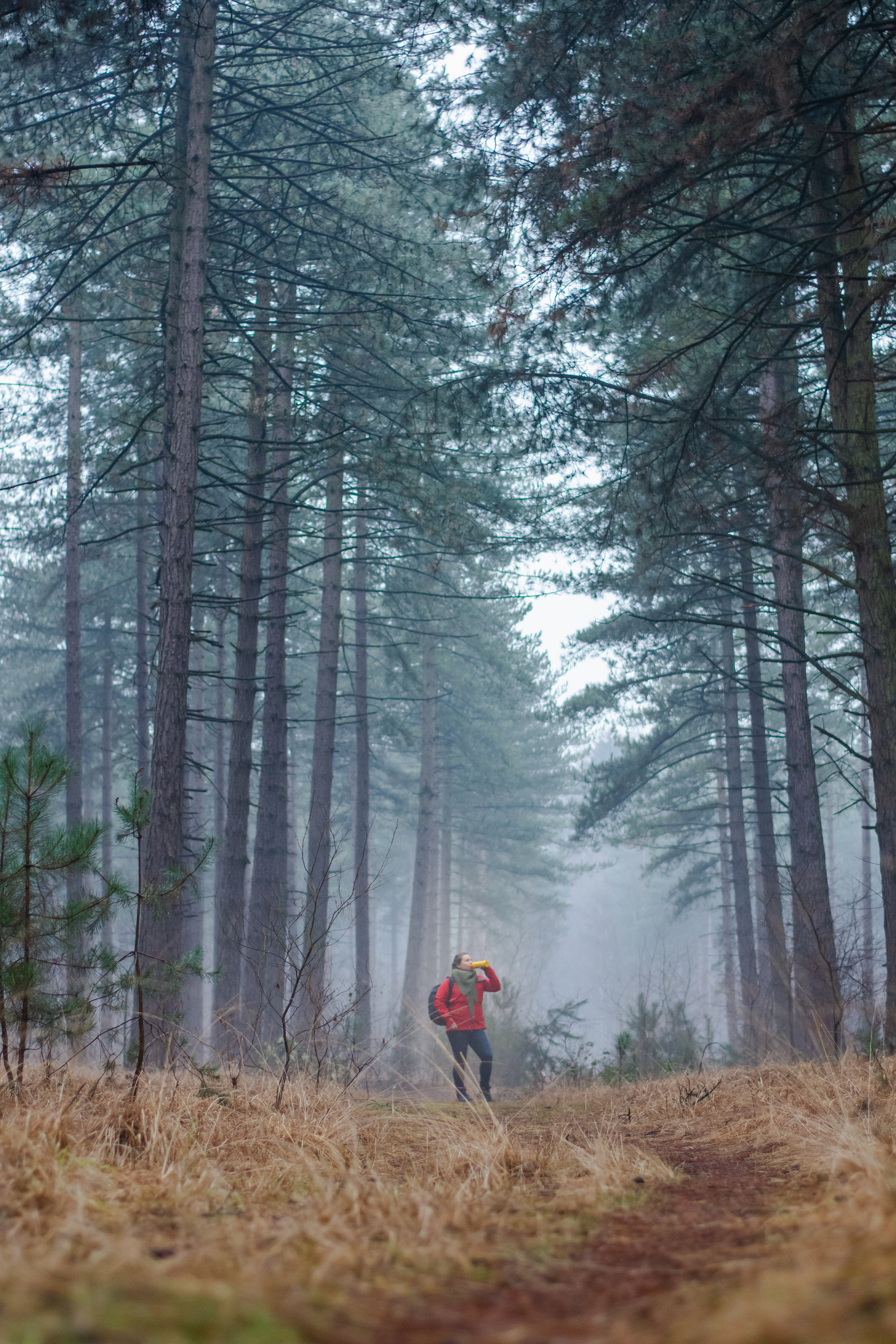 Kalmthoutse Heide België - CO2 compensatie - duurzaam reizen - eco reizen - blogger