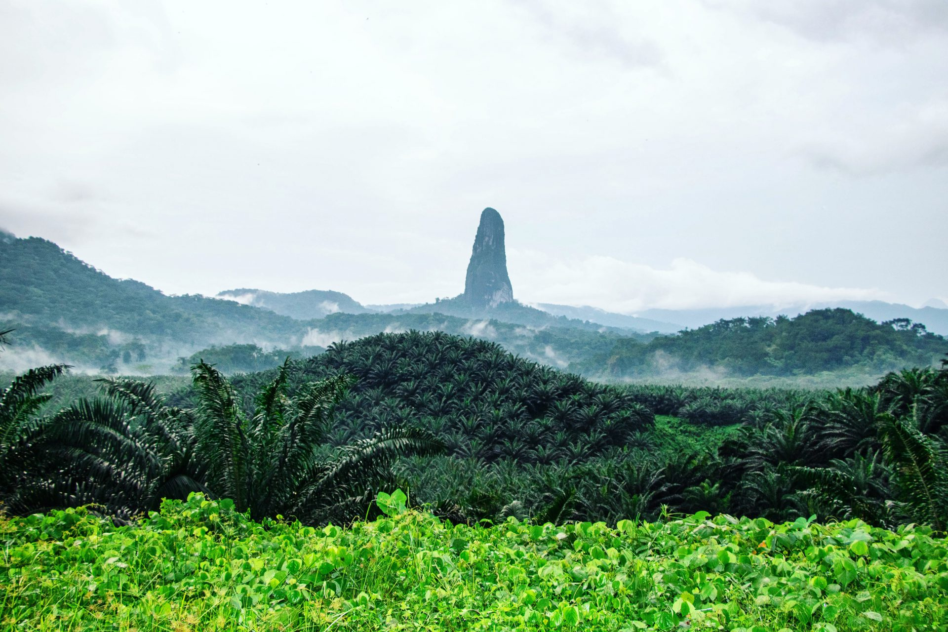 Famous Big Dog in São Tomé, Africa, Lonely Planet