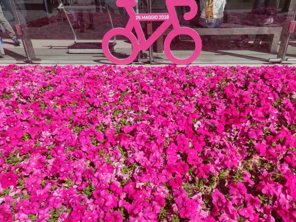 Val D'Aosta - Giro - Pink bicycle - bike pink flower - flower field and bike