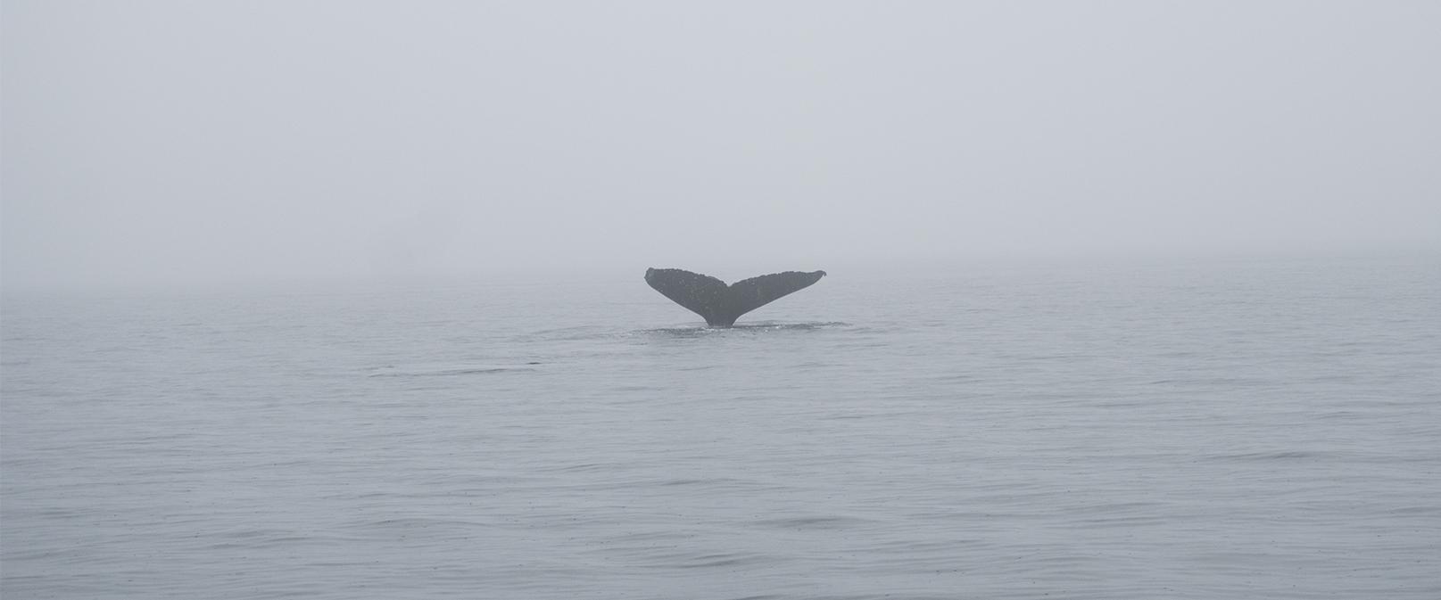 Duurzaam reizen: Walvissen spotten in West-Canada