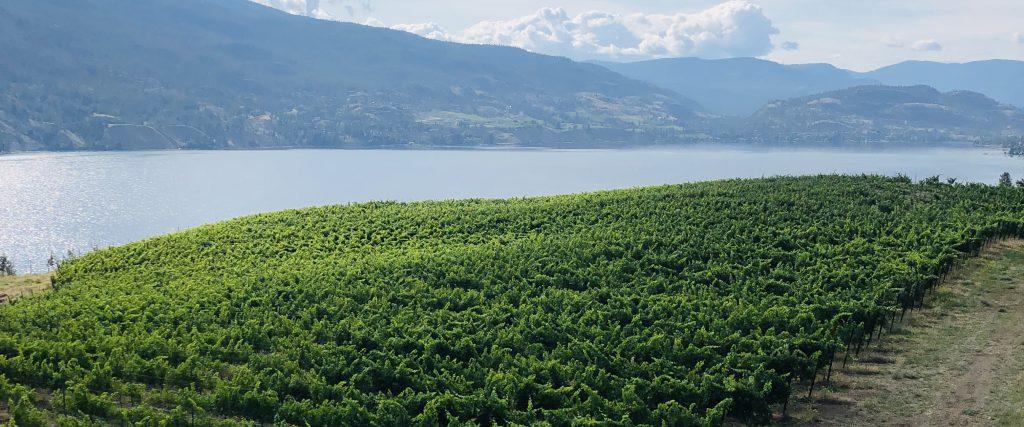Duurzaam reizen in West-Canada: wijnproeven in Okanagan Valley TravelRebel