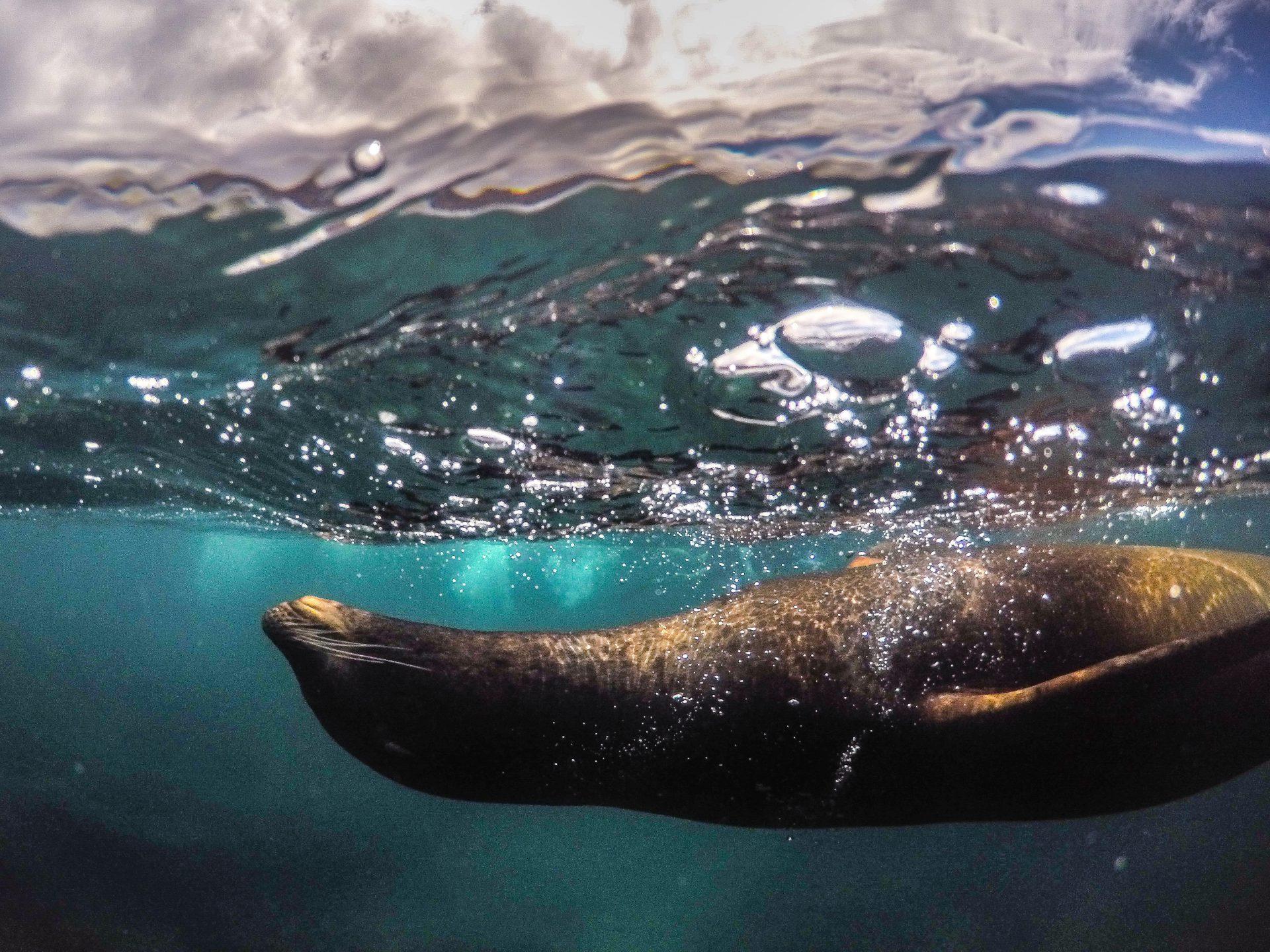 Galapagos Islands - Sustainable Tourism - TravelRebel