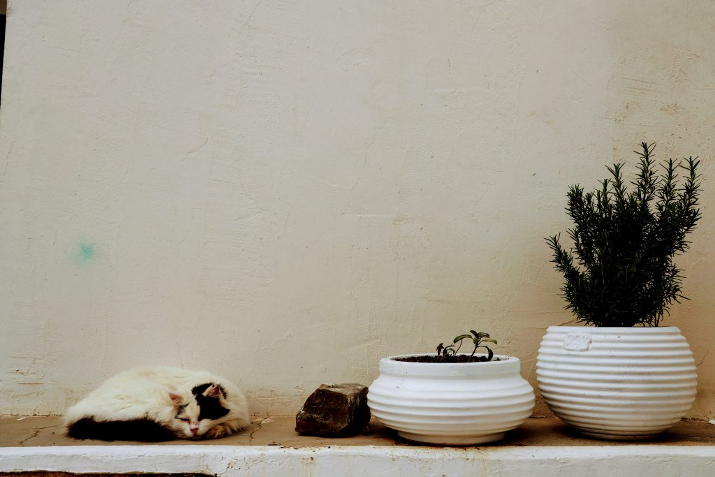 Street view Kythira Greece - Cat sleeping, cacti, white walls