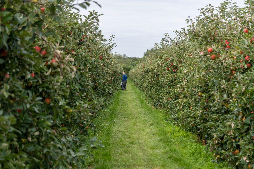 Fruitboerderij Vink Flevoland- Nederland - reisblog - Duurzaam reizen