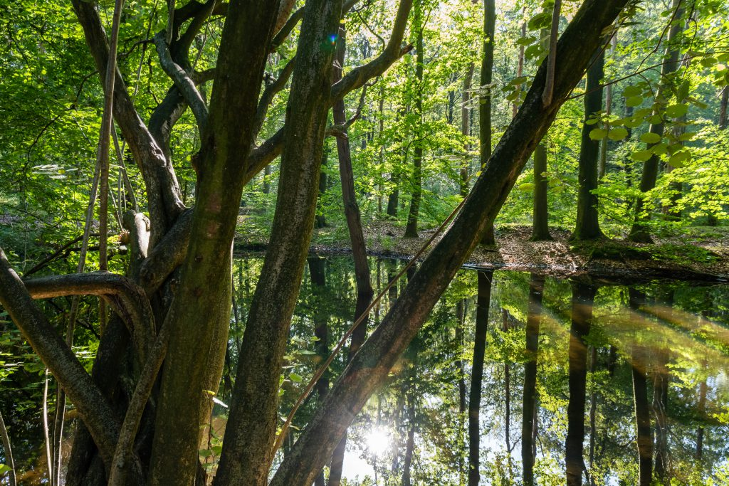 Waterloopbos Flevoland- Nederland - reisblog - Duurzaam reizen