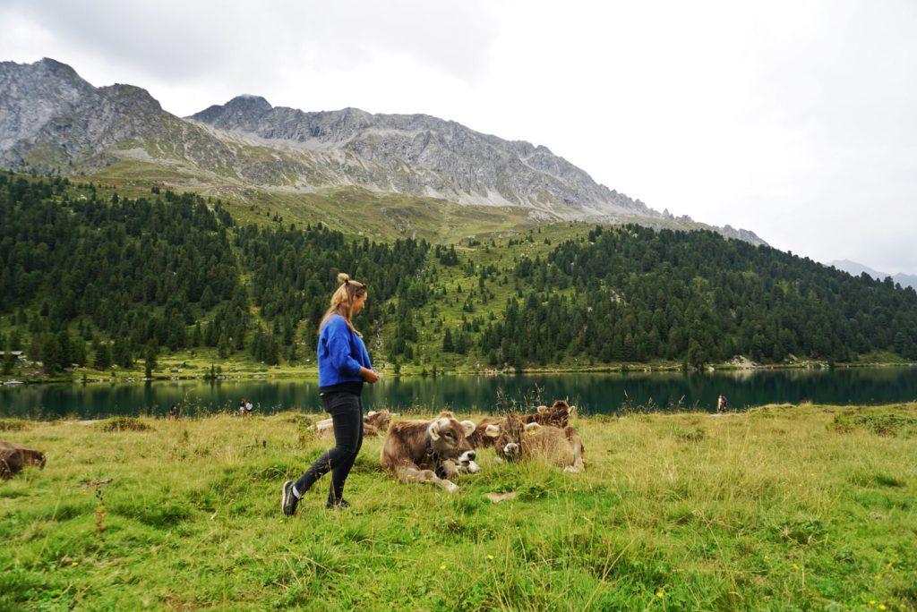 Koeien in Oostenrijk - Duurzaam reizen