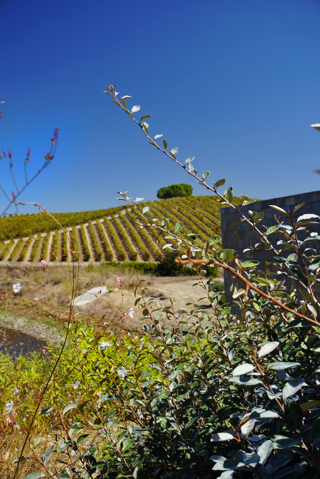 Wijnproeven in Portugal