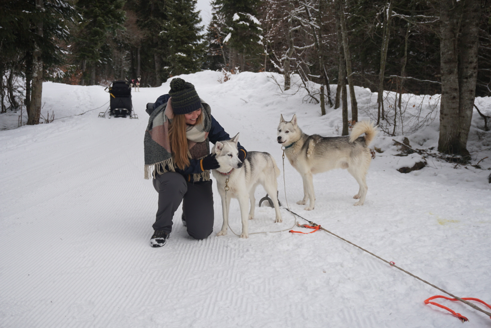 Dogsledding in Europe. It's even possible in France