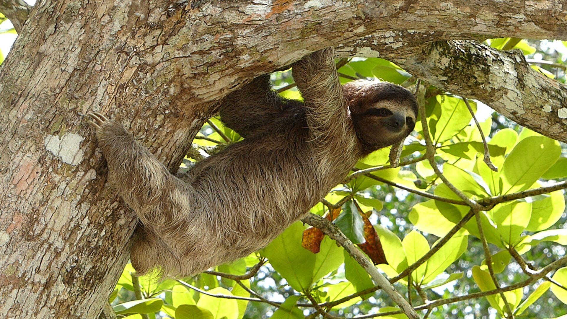 Duurzaam reizen in costa Rica - hiken in Parque Nacional Cahuita