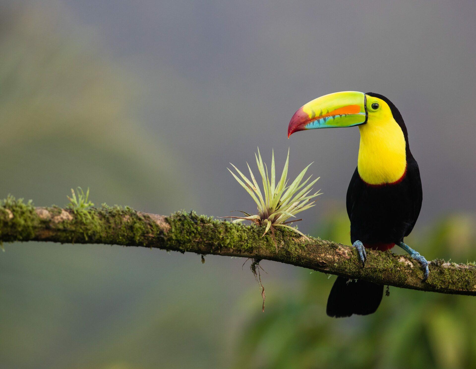 Duurzaam reizen in Costa Rica