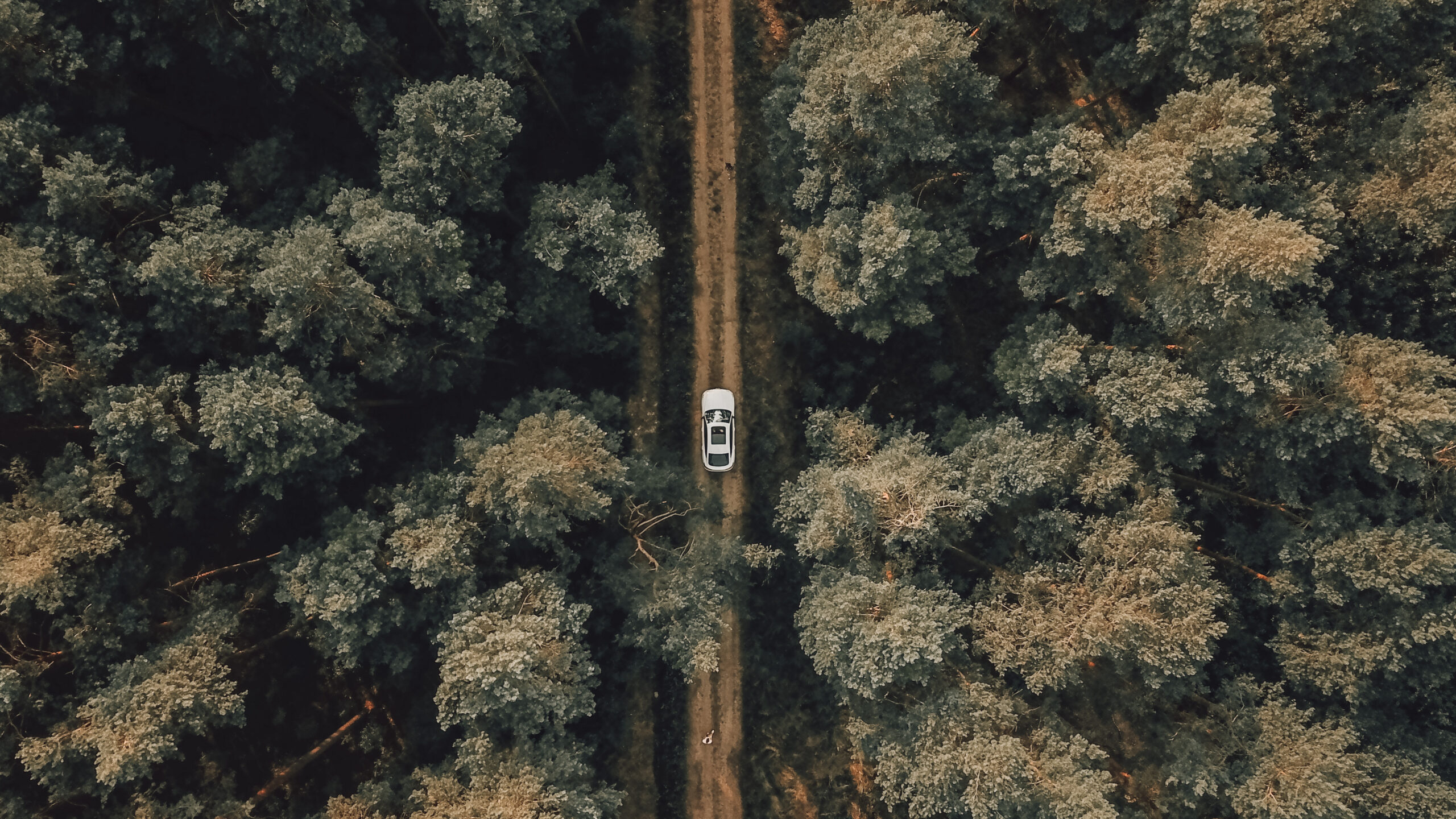 Car driving through the woods